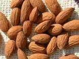 Almond nuts - photo 1