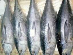 Frozen tuna - photo 2