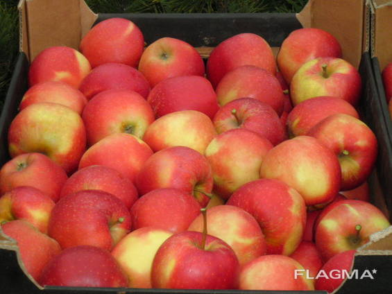 Apples Gala Must / from Poland